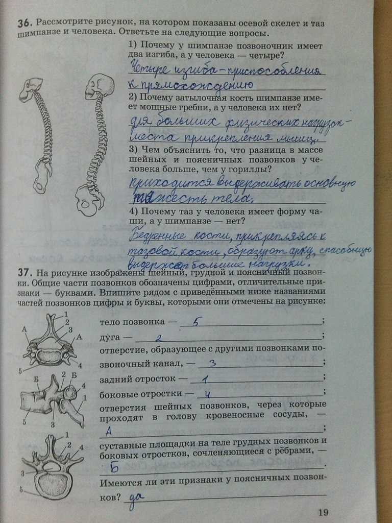 гдз по р.т по биологии 8 сонин