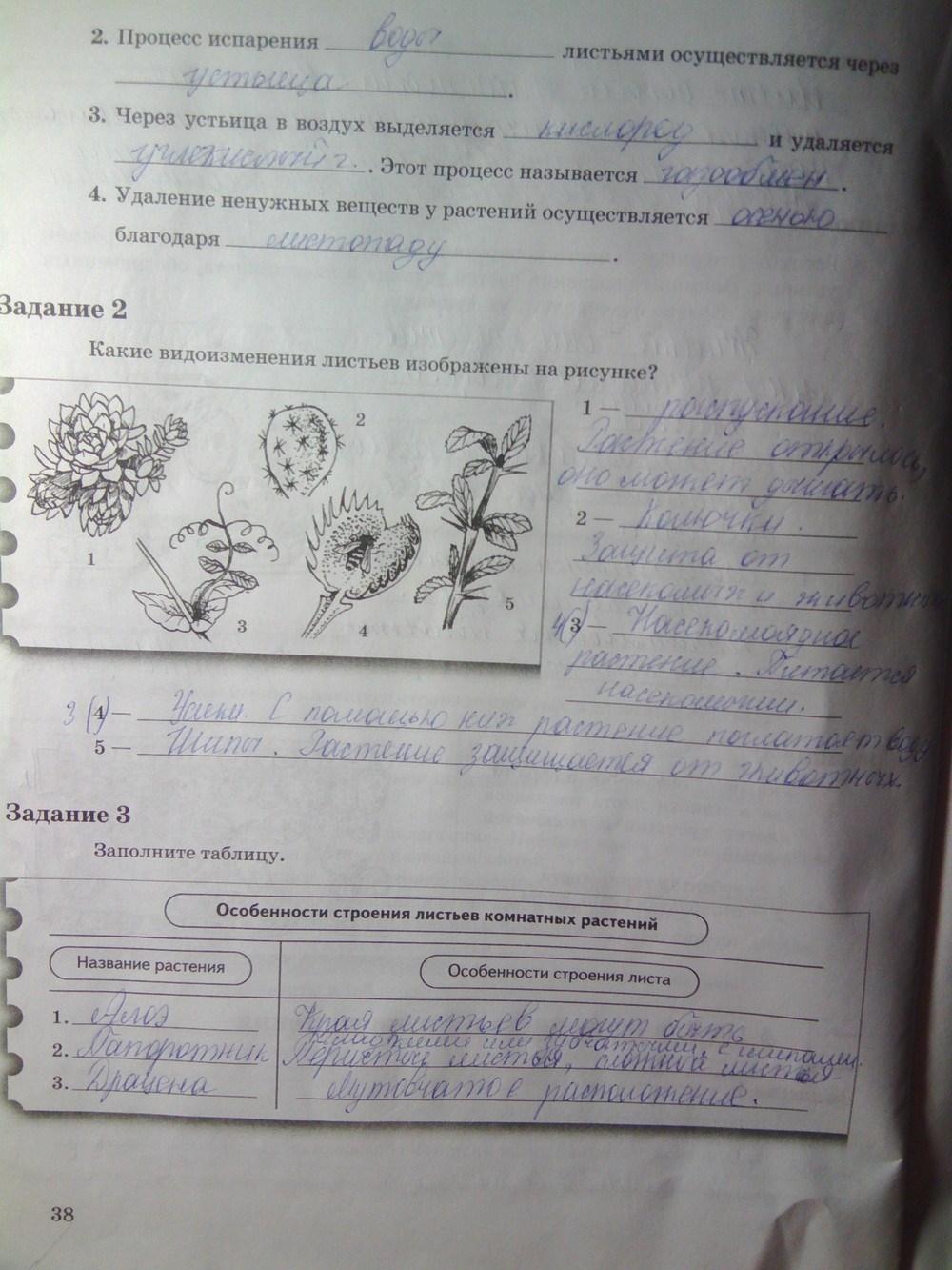 Гдз по биологии 6 класс в рабочей тетради пономарева 2 часть