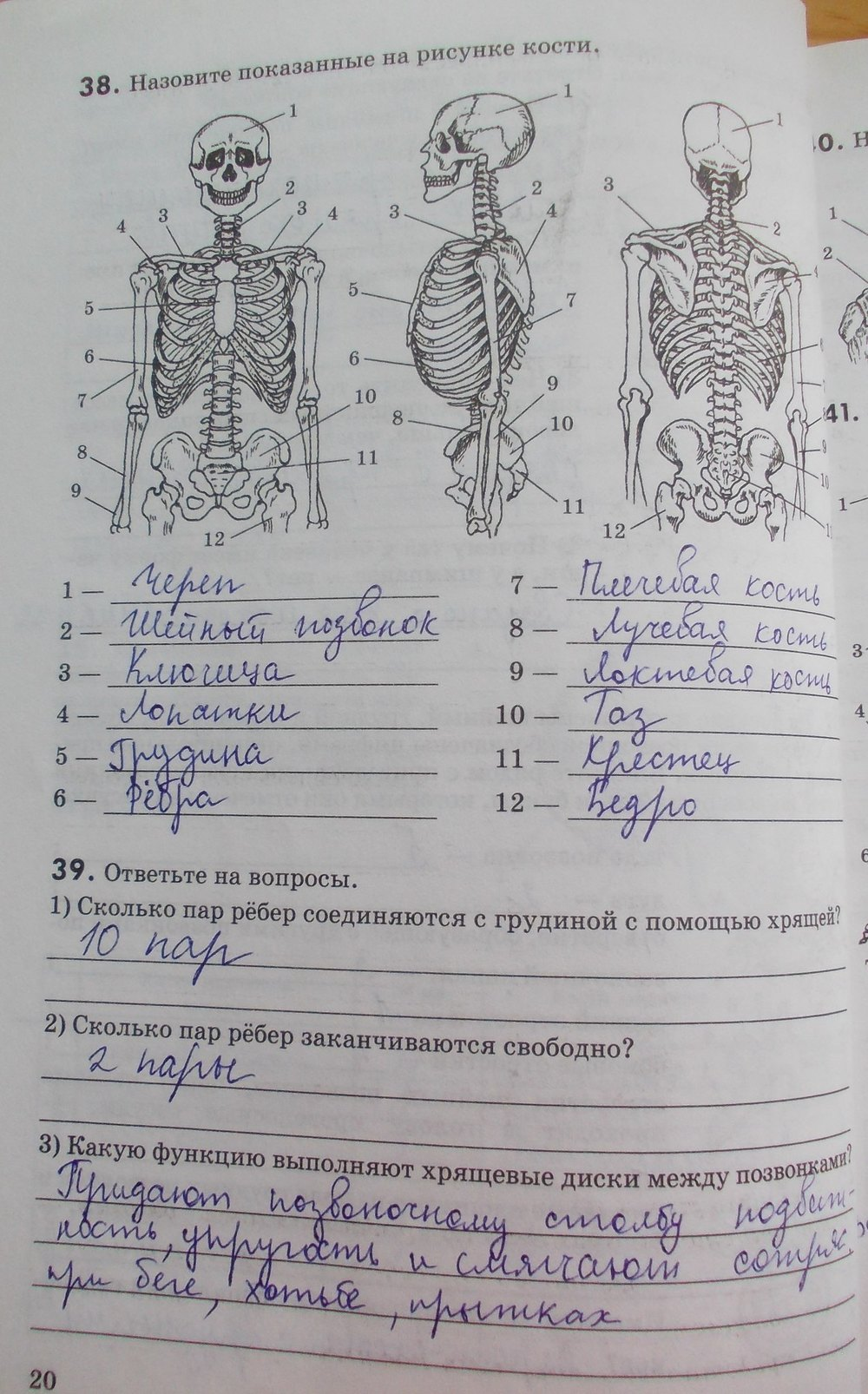 Маш гдз по класса биологии 8 д.в колесов и.н беляев р.д