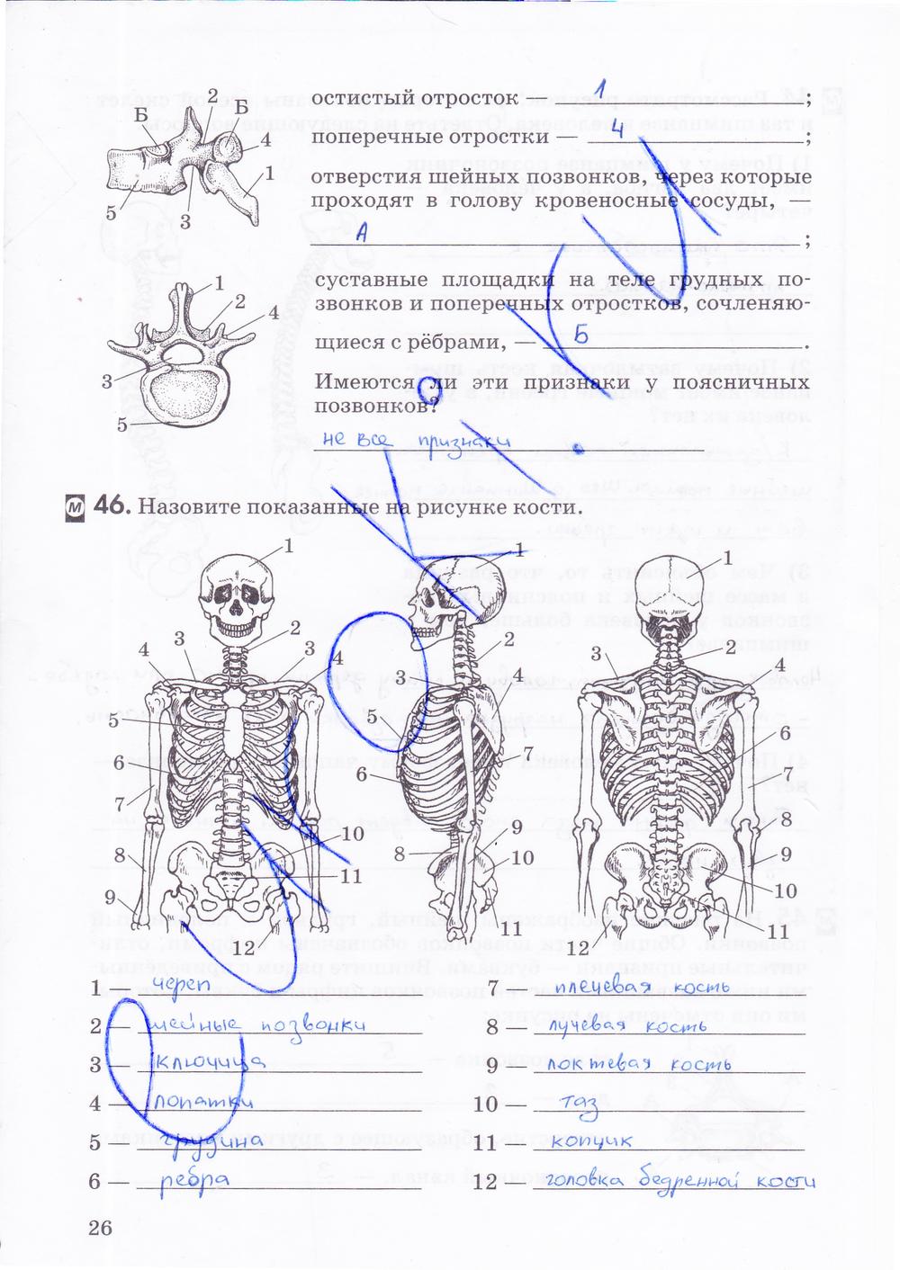 Биология 8 Класс Д.в.колесов Р.д.маш И.н.беляев Рабочая Тетрадь Гдз