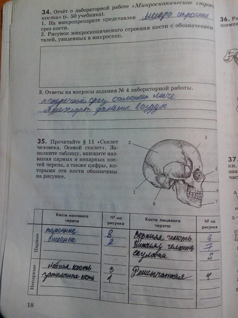рабочая маш тетрадь беляев решебник биологии по